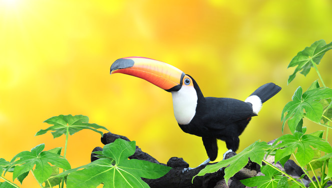 Toucan arrangement